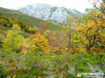 Hayedos Parque Natural de Redes;rutas la pedriza la jarosa guadarrama la pedriza mapa